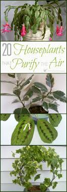 Best 25+ Air cleaning plants ideas on Pinterest | Indoor plants clean air, Good  plants for indoors and House plants air purifying