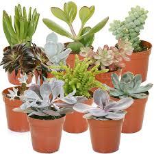 office pot plants. succulent mix 10 plants house office live indoor pot plant ideal gift