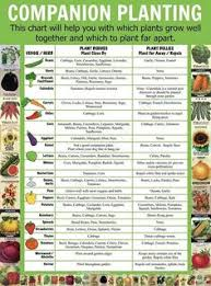 34 Best Companion Planting Chart Images In 2019 Companion