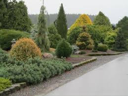 Small Picture 231 best EVERGREEN SHRUBS images on Pinterest Evergreen shrubs