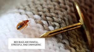 HOW TO GET RID OF BED BUGS UK ~ BED BUG CONTROL LONDON ~ CATCH-IT ...