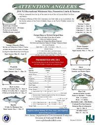 Nj Saltwater Fishing Information Nj Fishing Forums Nj