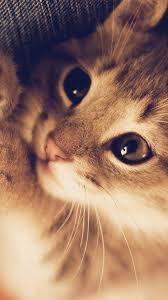 Cute Cat Wallpaper Iphone - Download ...