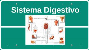 Sistema Digestivo by Alejandro Mendivil Malpica