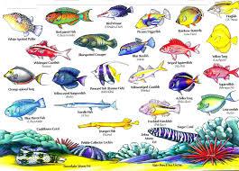 Oahu Fish Chart Hawaii Reef Fish Guide With Hawaiian Names 2 Aloha Joe