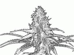 Small Picture Weed Coloring Book Coloring Coloring Pages