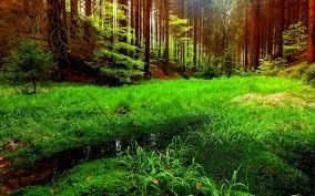 summer nature backgrounds. forest puddles beautiful grass summer nature trees evergreen wallpaper backgrounds :