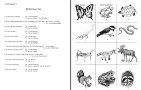 dichotomous key worksheet dichotomous key worksheet high school worksheets for all download free