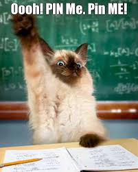 cute kittens quotes for kids. Unique Quotes Top 30 Funny Cat Memes Funny Quotes In Cute Kittens Quotes For Kids