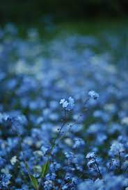 Fjellhøy | Flower aesthetic, Dark blue ...