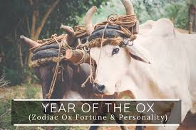 Year of the ox (yox) is lyricks & jl. Year Of The Ox Meaning Personality Prediction In 2021