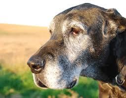 a lump on my dog