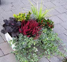 Winterharte Pflanzen Balkon 100 Images Buchverzueckt Balkon