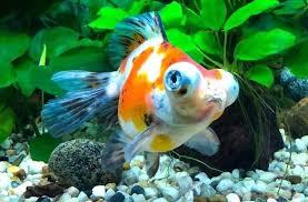 Mardel Fish Disease Chart Quick Cure Aquarium Airlineindustry