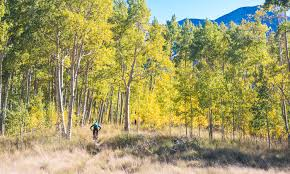 perfect day essay perfect day foods new harvest home entertainment  fall photo essay crested butte colorado chasing epic mountain fall photo essay crested butte colorado
