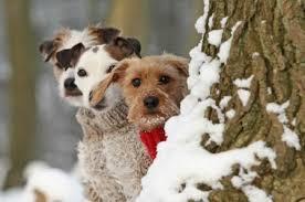 dogs in winter - Dogs & Animals Background Wallpapers on Desktop Nexus (Image 1641094)