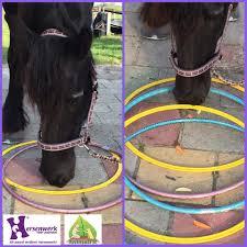 Hoepels Hoepels Zijn Leuk Materiaal Om Hersenwerk Voor Paarden