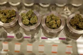 will marijuana dispensaries lead to abuse pitt study says be  in this friday 26 2015 photo different varieties of marijuana flowers are displayed at medical marijuana dispensary kaya shack in portland ore