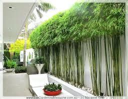 landscape screen ideas best garden screening ideas on garden privacy screen bamboo screening and outdoor screens with garden privacy