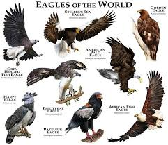 Pin By Alejandro Robledo On Nature Birds Of Prey Types Of