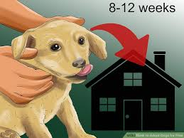 pictures of dogs for free 2. Simple Free Image Titled Adopt Dogs For Free Step 10 Intended Pictures Of For 2 S