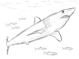 Small Picture Sharks coloring pages Free Coloring Pages