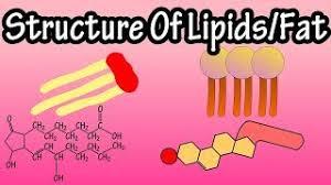 fats triglycerides phospholipids