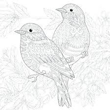 Adult Bird Coloring Pages Realistic Bird Coloring Pages Bird