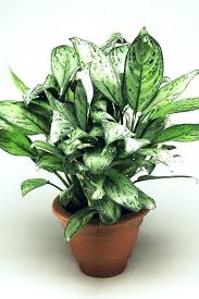 common house plants names pictures and best indoor in stan