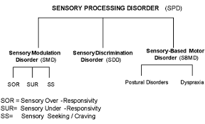 Sensory Processing Chart