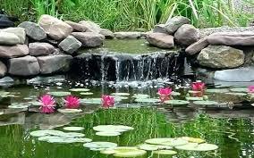 backyard pond decorating ideas finest decorations outdoor fish id concrete designs flagstone inspiration idea