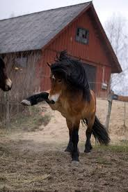 best ideas about pretty horses horses pretty 17 best ideas about pretty horses horses pretty animals and black horses