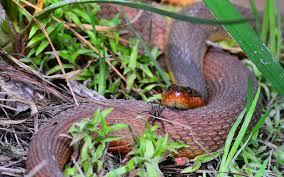 homeschool in the garden snakes 101