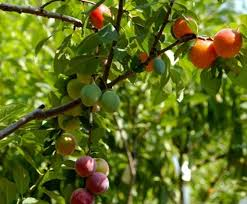 Travel Channel  Tips For Traveling The World Explore TravelerDifferent Fruit Trees