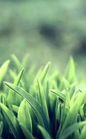 Green Grass Iphone Wallpaper Hd ...