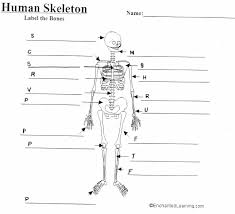 mrs barragree s th grade website blank skeleton diagram