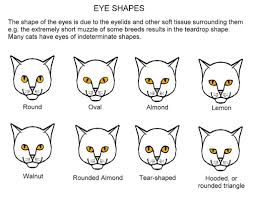 Eye Shapes A Chart Showing In Slightly Exaggerated Form Flickr