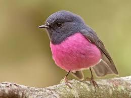 Bildresultat för pájaros