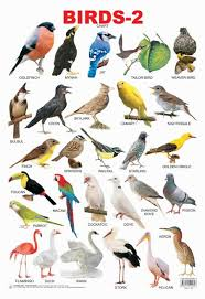 Birds Chart For Kindergarten Educational Charts Series Birds 2