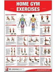 66 Thorough Golds Gym Xrs 50 Exercise Chart