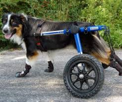 10 best dog wheelchairs to in