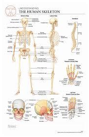 Human Bone Chart Body Scientific International Post It Anatomy Of Human Skeleton Chart Teaching Supplies Classroom Safety