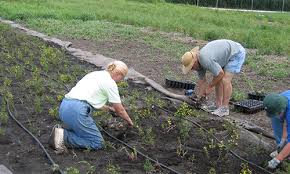 Please note, there is a minimum of three (3) work shifts/days required (some committees require a four (4) day minimum) in order to be a volunteer but encourage volunteers to donate. Volunteer Lake County Forest Preserves