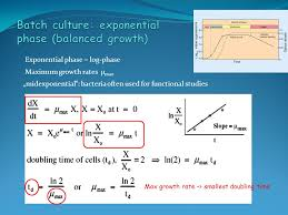exponential phase log phase midexponential bacteria often used for functional stus maximum growth rates μmax max growth rate smallest doubling