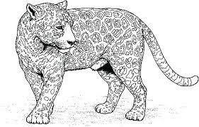 Coloring Pages Jaguar Coloring Pages For Preschoolers Baby Leopard