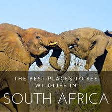 best places for travellers to visit in south africa for adventures with wildlife and safaris