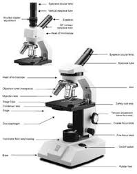 Parts Of The Microscope 13 Best How To Microscope Information Images Life Science