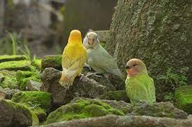 INA Bird Farm of Java - Surakarta | Facebook