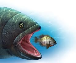 Kết quả hình ảnh cho cá lớn nuốt cá bé