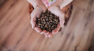 However, it cannot produce the same texture and consistency that premium burr grinders can, but it can create decent coffee grounds for better mornings. How To Grind Coffee Beans Without A Grinder The Indoor Haven